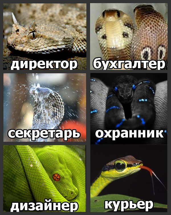 канеш склочный коллектив картинка со змеями этого выбрали восемь
