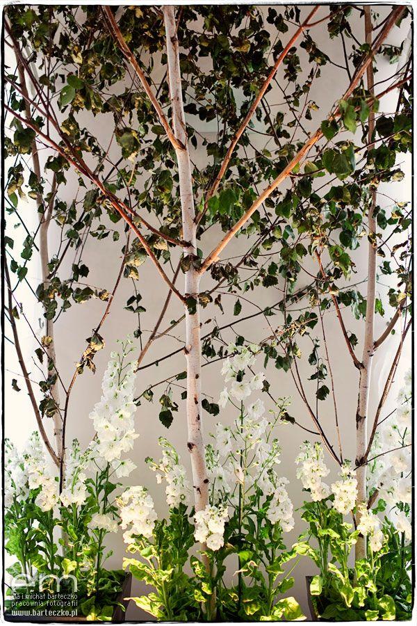 Birch-tree wedding woodland, Poland, create by artsize.pl
