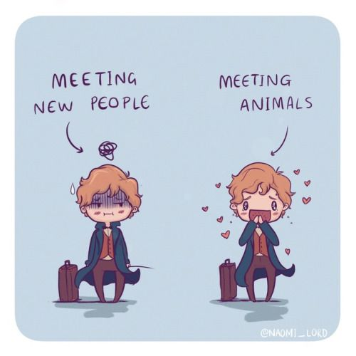 """noonelikesaquaman: """"I can really relate to Newt haha animals are wayyy easier to talk to than people :3 """""""