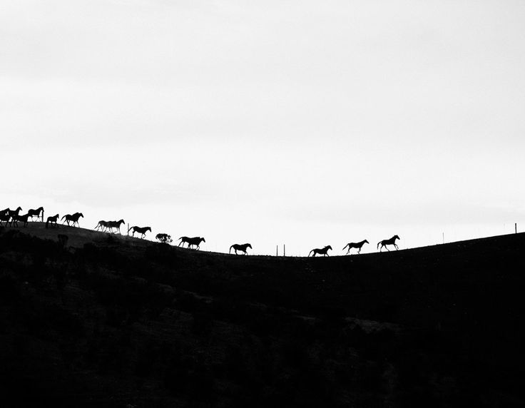 """""""Running Free"""" is a Limited Edition fine art photography print. This image is a tribute to all wild mustangs horses in the American West. Eco-friendly and museum quality prints by @cardelucci available online"""