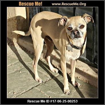 - Arizona Small Dog Rescue - Phoenix, AZ Rescue Animals
