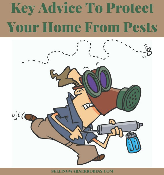 Key Advice on How to Protect Your Home From Pests via Anita Clark at Coldwell Banker SSK, Realtors, in Warner Robins Georgia.
