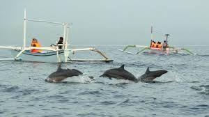 Wisata Dolpin Lovina Bali: Dolphin Tour Lovina