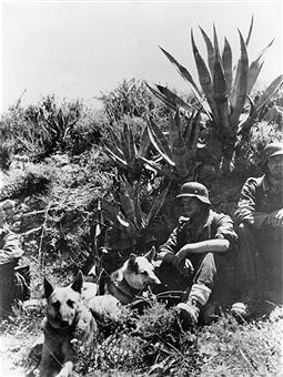 2. WW, Greece campaign - conquest (battle) of crete (20.05.-) 'operation mercury' , war theater: Mountain troopers with messenger dogs taking a short rest. Pin by Paolo Marzioli