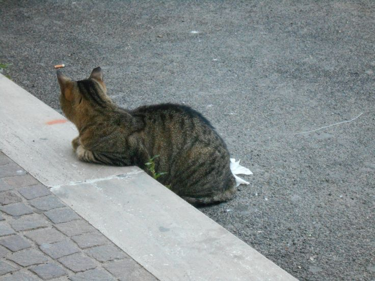 Eh la vita per i gatti del porto di Anzio non è certo facile! Arriva il momento in cui bisogna rilassarsi e riposare