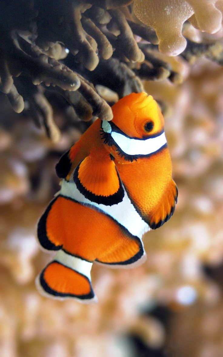 263 best fishes images on pinterest nature under the sea