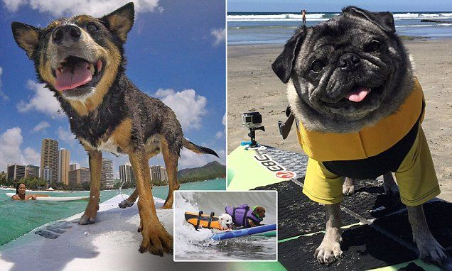 Inside the surprisingly competitive life of competitive DOG surfing