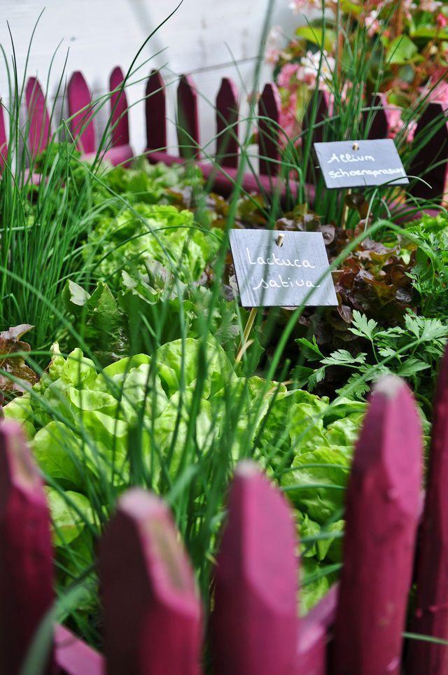 Les 58 meilleures images du tableau jardinage et entretien for Entretien jardin 57