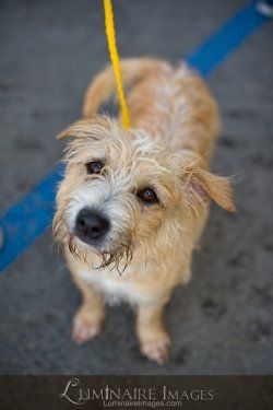 Orange County Humane Society – Pet Adoption In Huntington Beach, CA, USA #looking #to #adopt #a #dog http://pet.remmont.com/orange-county-humane-society-pet-adoption-in-huntington-beach-ca-usa-looking-to-adopt-a-dog/  Who We Are The Orange County Humane Society (OCHS) is dedicated to the protection of abused, unwanted, neglected and under-appreciated animals. Dogs and Cats for Adoption All of our adoptions include: spay/neuter, pre-adoption exam, vaccinations, microchip with registration, 1…