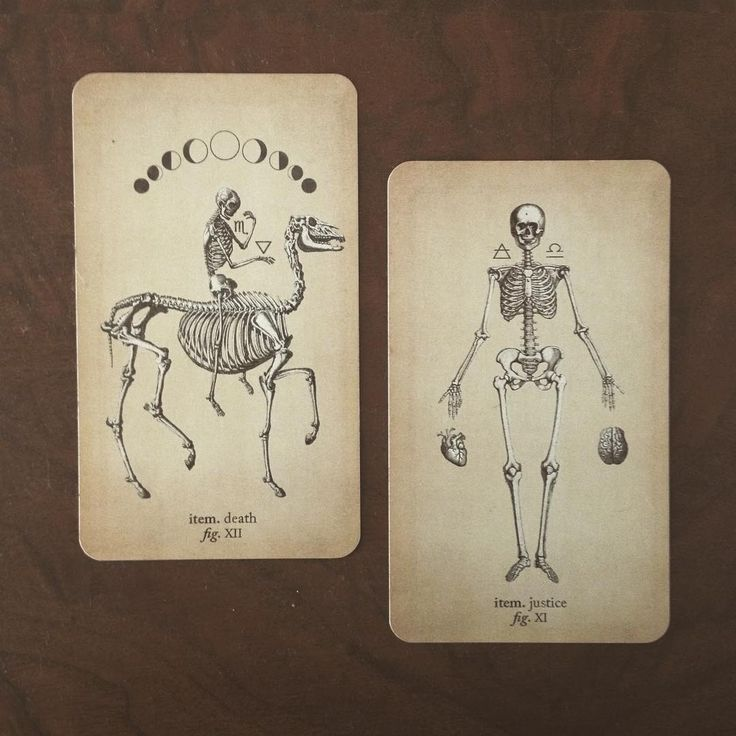 Antique Anatomy Tarot  https://www.instagram.com/blackandthemoon/