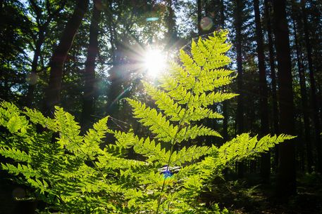 'In the dark forest - Im dunklen Wald' von Bernd  Kasper bei artflakes.com als Poster oder Kunstdruck $16.63