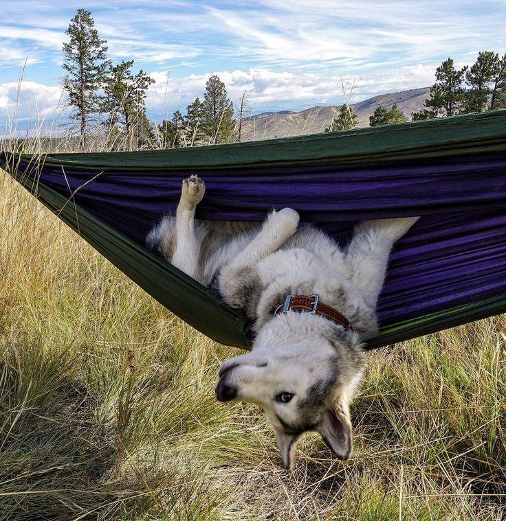 Dog on the Hammock.