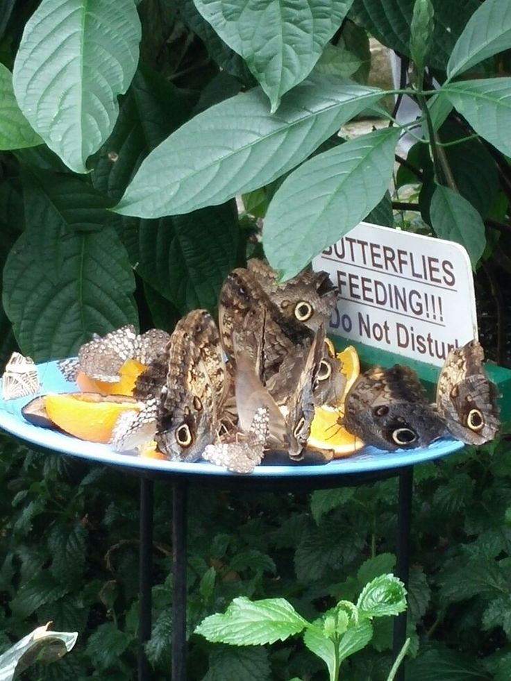 Inspiration for my butterfly feeder coming soon. This one was at the Butterfly Conservatory in Niagara Falls.