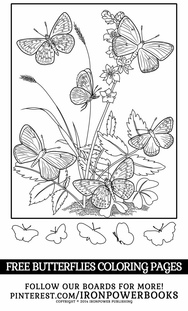 Difficult butterfly coloring pages - Butterflies Coloring Pages For Girls From Ironpowerbooks Please Use Freely