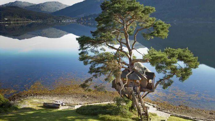 6 Rumah Pohon Terindah di Dunia Ini Bikin Kamu Gak Mau Pulang, Nomor 4 Tempatnya Romantis Parah!