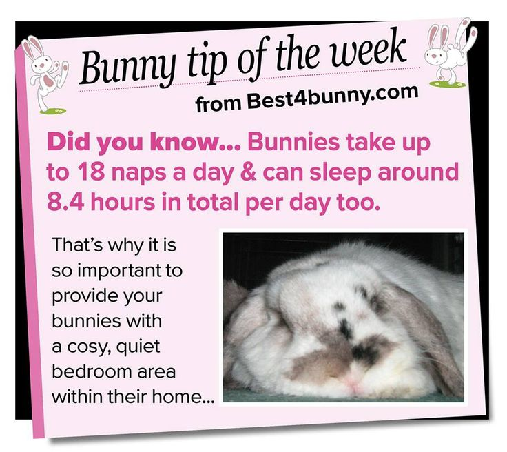 how to take care of a bunny rabbit