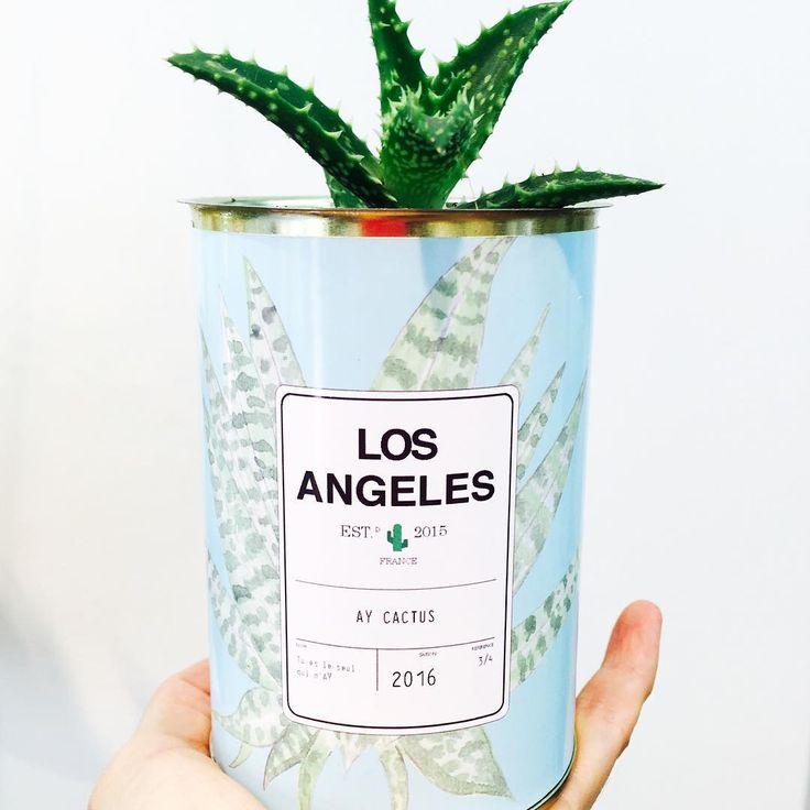 Essayer de prolonger les vacances 🌵 @aycactus #aycactus #cactus #cactusgram #cactuslover #losangeles #cute #fleur #deco #madecoamoi #mamieboude #decoration #fleux #lemarais #paris #love #voyage #vacances #summer #instasummer #passion #vegetaux #cadeau #personnalisable