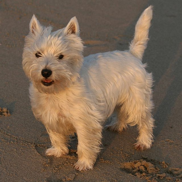 Is Precise dog food good for our canine friends? Click on the photo above to read the article.