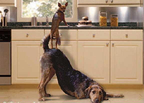 26 best Team Work Animals images on Pinterest | Funny ...
