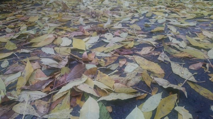 different colored leaves