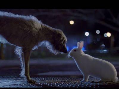 """El clásico """"I will survive"""" se convierte en himno de las mascotas abandonadas, gracias a este spot. bit.ly/1OH9Bn3"""