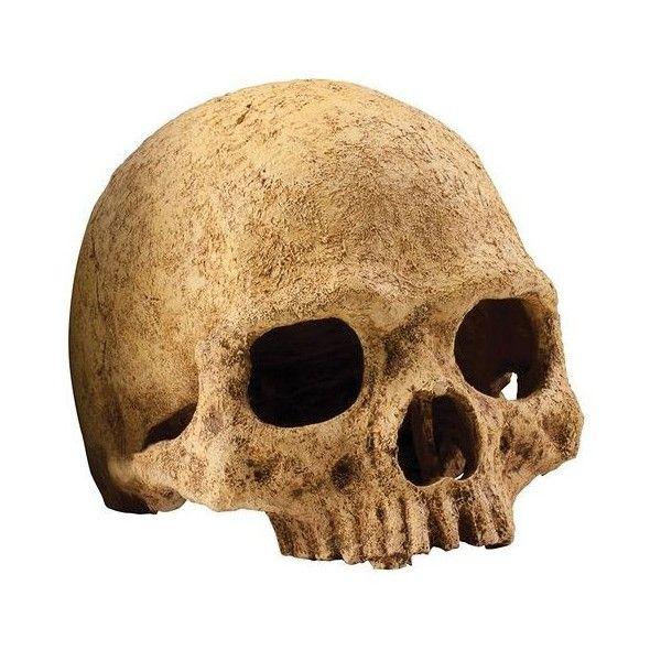 Exoterra Décoration Primat Skull pour Reptiles et Amphibiens 15x16x16... ❤ liked on Polyvore featuring home, home decor, skull home decor and skull home accessories