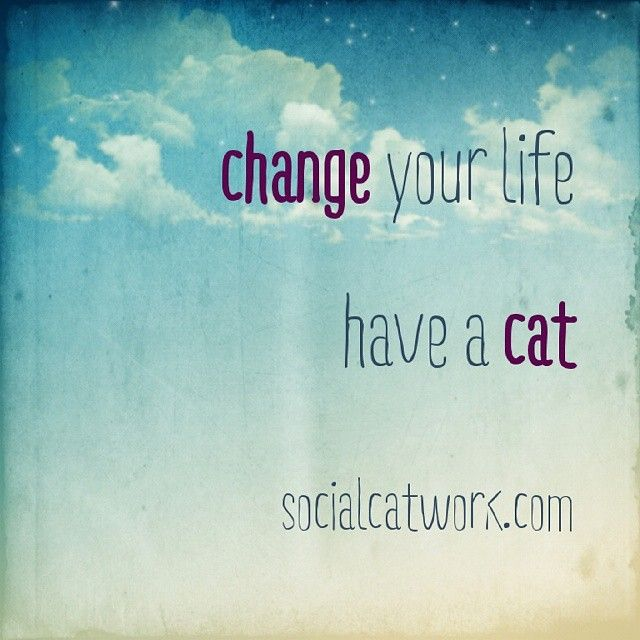Change your life, have a cat