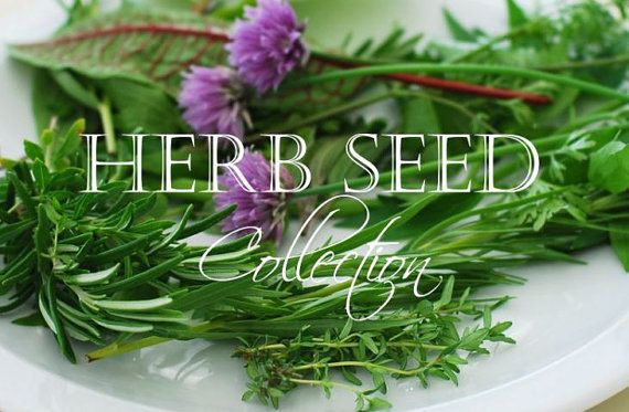 Herb Seeds Organic Herb Seed Collection by thegardenstudio on Etsy, $20.00