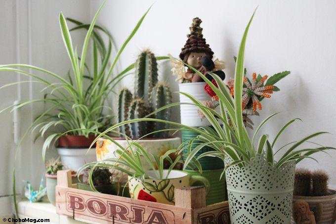 Les 25 Meilleures Id Es De La Cat Gorie Rebord Pour Plantes Sur Pinterest Rebord De La Fen Tre