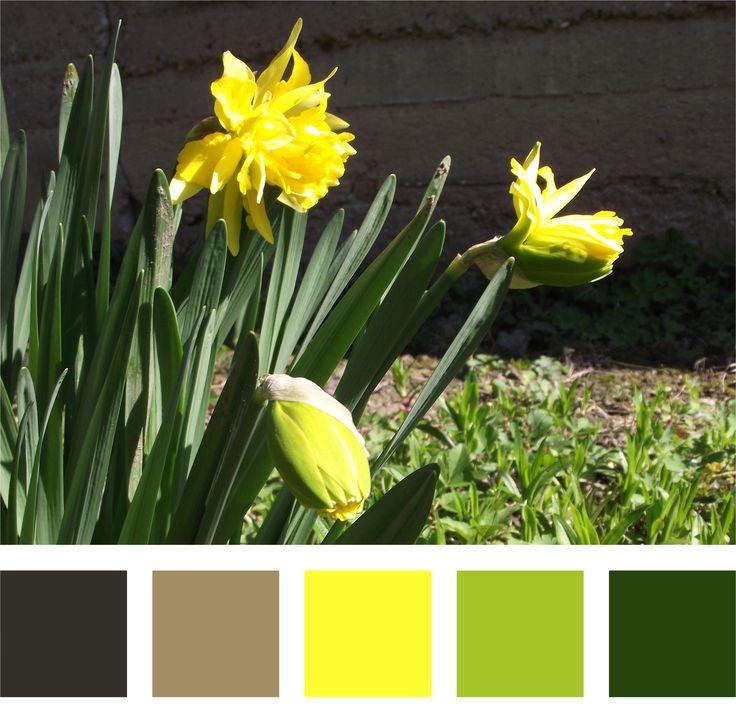 Nárcisz színpalettával #nárcisz #tavasz #színpaletta #colorpalett #sárga #virág