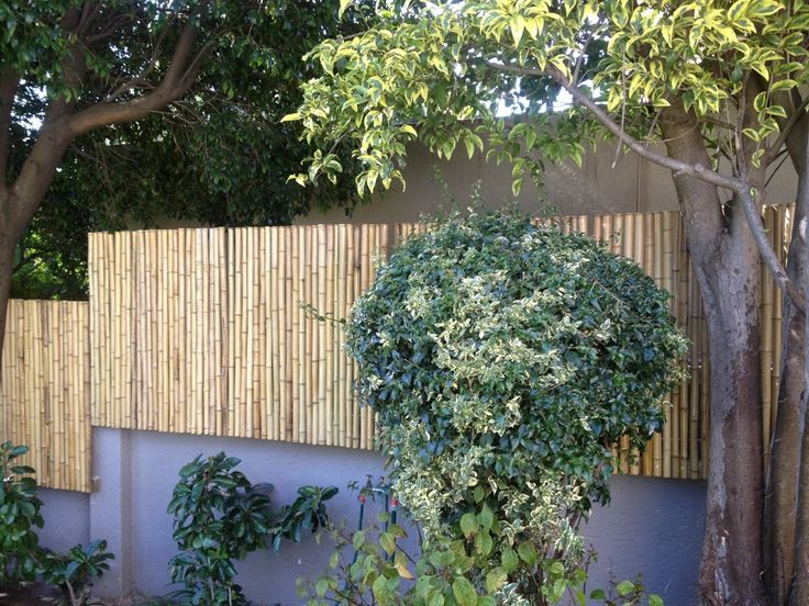 Natural bamboo fencing (30-40mm) used for a wall extension. Job done in Bedfordview!