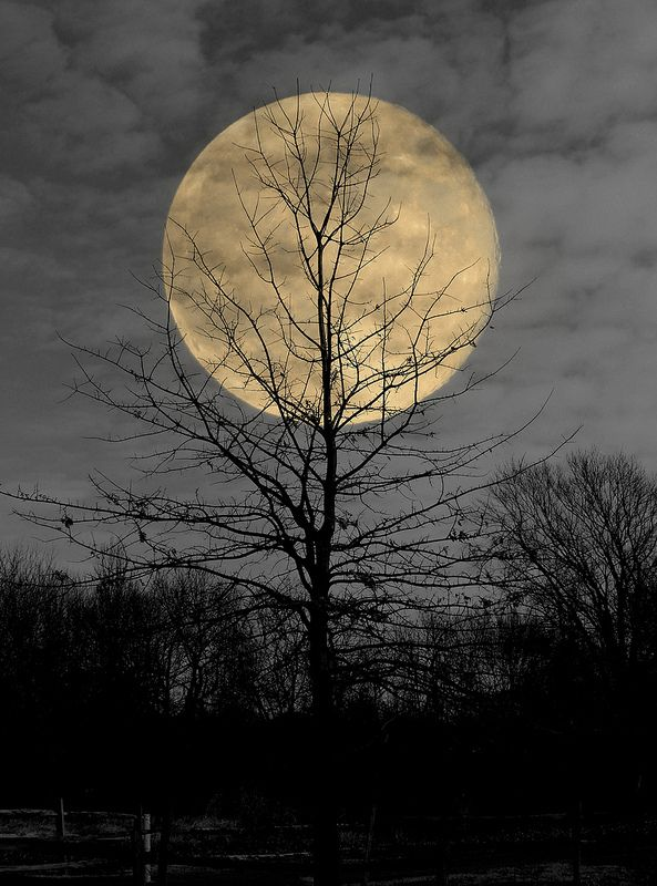 """Harvest Moon"" - photo by Theodore McCauley (tmac0723), via Flickr; 1st place"