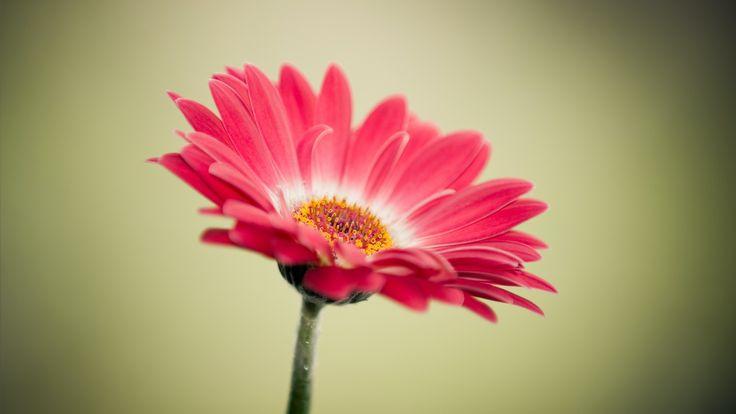 Cute Flower Wallpaper