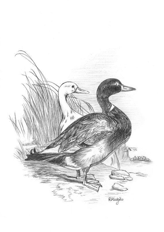 Ducks Original Graphite Pencil Drawing by GraphiteArtStudio, £12.00