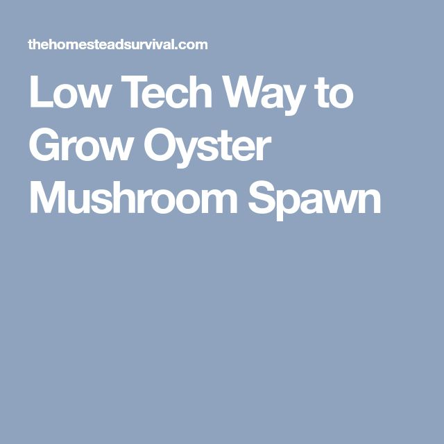 Low Tech Way to Grow Oyster Mushroom Spawn
