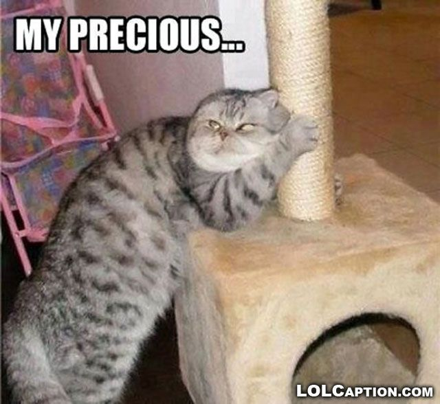 cat+pictures+with+captions | funny-cat-pictures-with-captions-cats-sayings-photos-my-precious