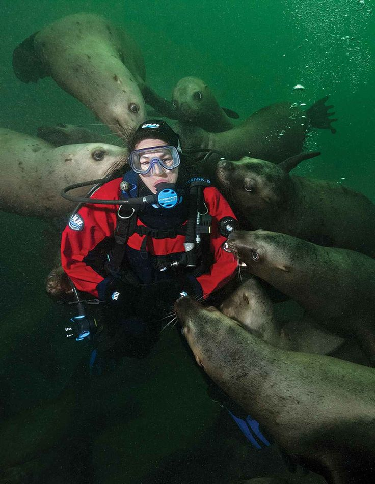 SEA LIONS ALL THE SEA LIONS!Drive and Dive: Cold-Water Diving in British Columbia | Scuba Diving Magazine