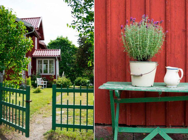 TRÄDGÅRD MED LÄKANDE ÖRTER   Utmed den slingrande byvägen i Enånger bor Sofia och Mats Erik i ett falurött gammalt hus. Här har de anlagt sin trädgård med läkande örter.