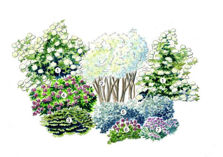 Koko: 4m x 7.5m  1. Lumipalloheisi, Viburnum opulus 'Pohjan Neito' (3kpl) 2. Marjatuomipihlaja, Amelanchier alnifolia (3kpl) 3. Kääpiöpalsamipihta, Abies balsamea 'Nana' (3kpl) 4.  Tornionlaaksonruusu, Rosa majalis (4kpl) 5. Villapaju, Salix lanata (3kpl) 6. Kesäpikkusydän, Dicentra formosa (6kpl) 7. Siperianasteri, Aster sibiricus (7kpl)