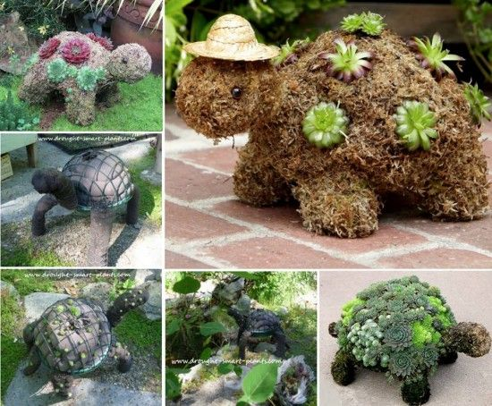 Succulent Turtle Planter Topiary Will Look Cute In Your