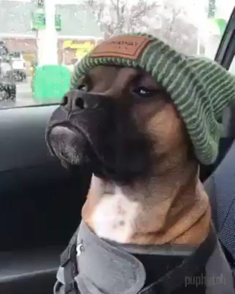 estilo cachorro racionais