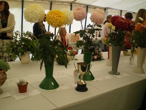 'Mark's Chrysanthemums'
