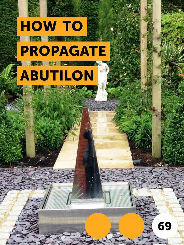 How To Propagate Abutilon Indoor Growing Plants Plant Diseases