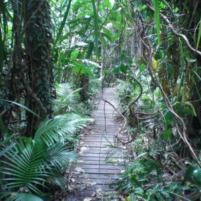 Daintree Rainforest, Cape Tribulation Australia