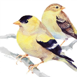 Goldfinches by Sharon Rowley Morgio (Our neighborhood goldfinches are already turning from olive to yellow - a spot of color before the grass greens up and flowers bloom.)