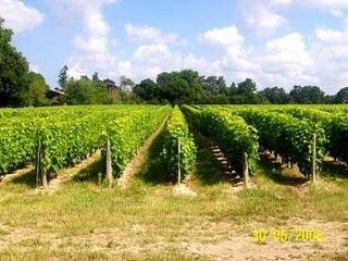 Vignobles AOC Quincy Reuilly by Vierzon Tourisme, via Flickr