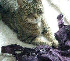 This is Ginger, who works with Linda of Uplift Custom Bras, and is possibly the world's only feline bra fitter - http://www.workfromhomewisdom.com/2015/01/08/pet-fursday-worlds-feline-bra-fitter/