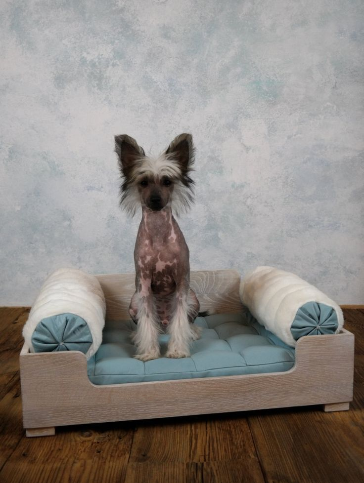 Leather dog bed / cat bed by ooMelampus on Etsy