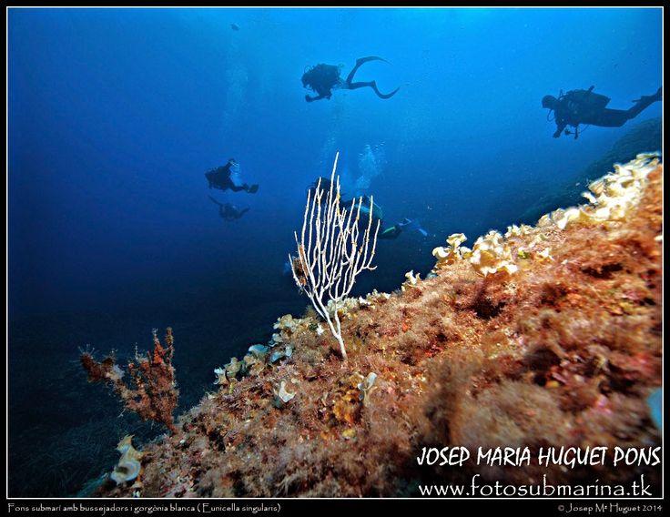Fotos Submarinas: Tobogan 20 - 09 - 2014