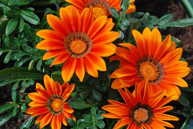 Wirtualny Florysta – Twój florystyczny doradca www.florysta3d.pl